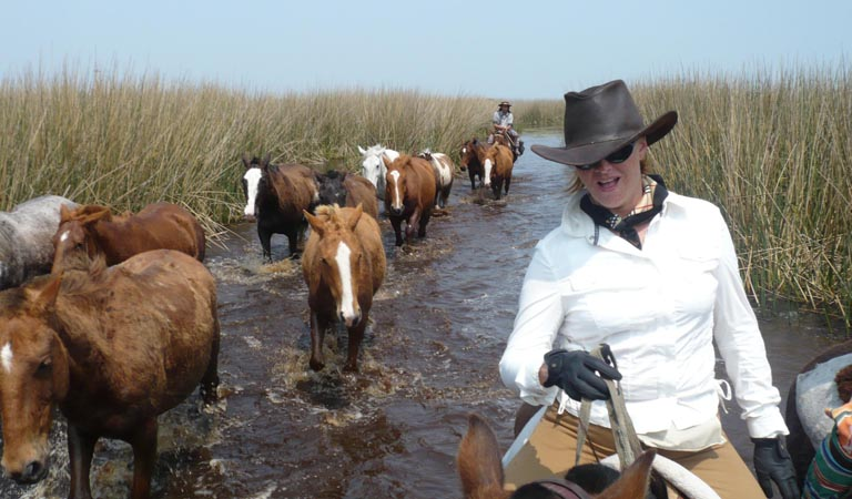 SSclient horses in swamp