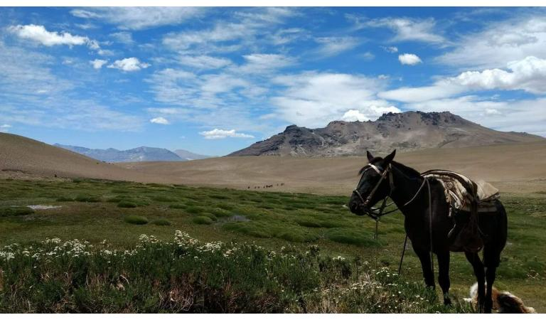 Andes Horse