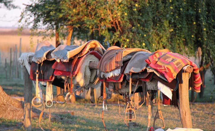 colourful saddles
