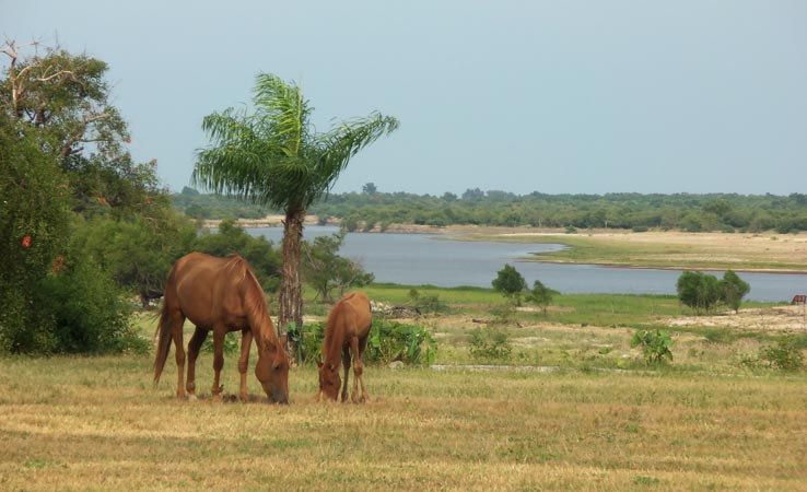 horse and baby by river2