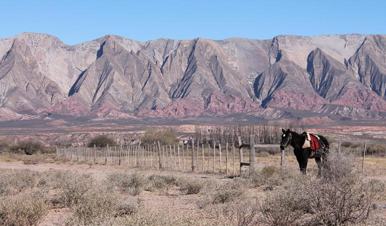 horse and salta mountains