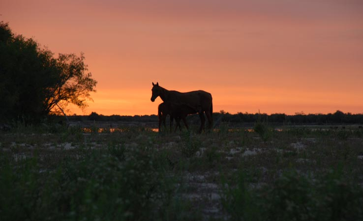 horse in sunset2