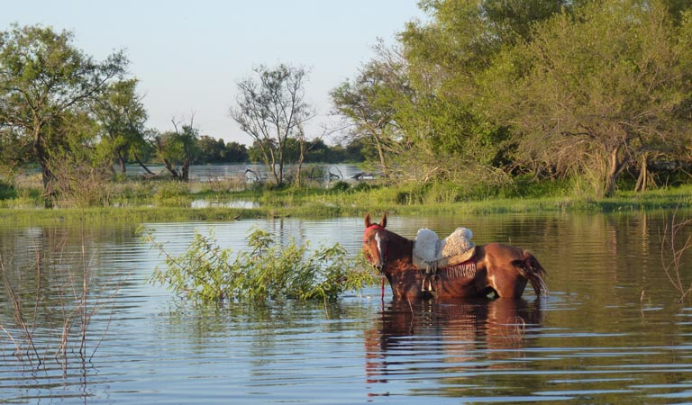saddled horse in water2